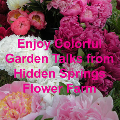 Colorful Peony Presentations from Hidden Springs Flower Farm