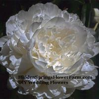 White Wedding Flowers From HiddenSpringsFlowerFarm.com