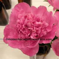 Peony Bouquet Perfect