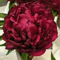 Dark Red Double Peony Highlight
