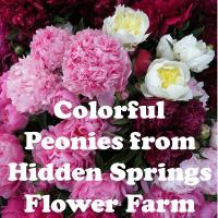 Colorful Peonies from Hidden Springs Flower Farm