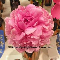 Speckled Pink Peony The Fawn
